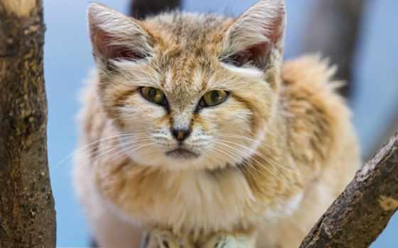 кот, песок, cute, cats, las,