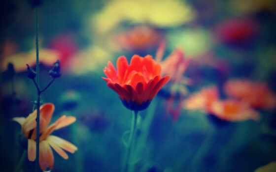 цветы, blue, поле, red, depth, природа, color, трава, зелёный