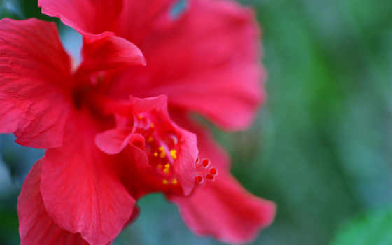 цветок, макро Фон № 25511 разрешение 1920x1200