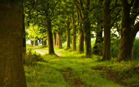 лес, summer, красивый