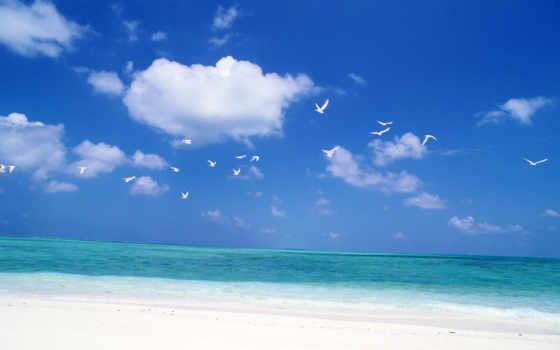 птицы, небо, море