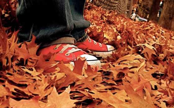 осень, кеды, листья