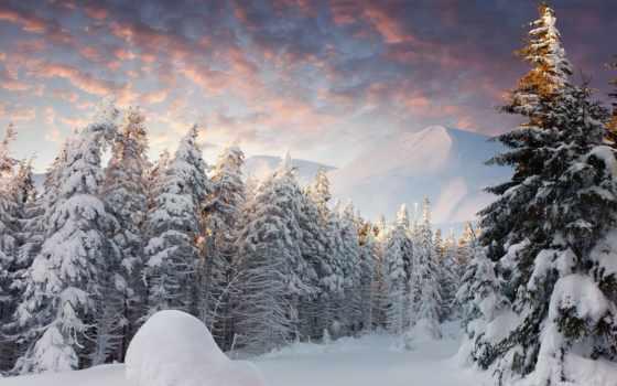 лес, winter, хвойный, снег, зимой, заснеженый, лесу, зимы, природа,
