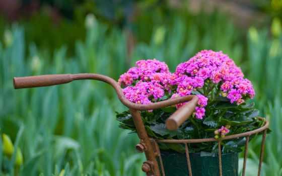 bike, flickr, flowers, велосипед, best, корзина,