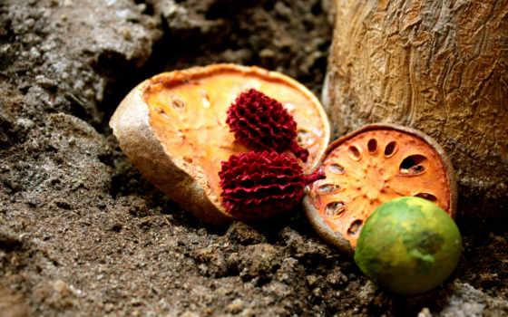 dry, fruits, ago, плод, лет, почти, dried,