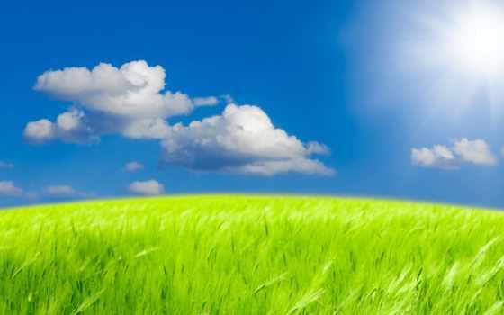 природа, summer, photoshop, небо, пшеница, поле, фотошопа, фоны, sun, oblaka, cvety,
