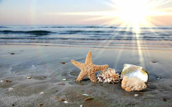 ракушки, песок, море, summer, water, waves, star, пляж, ocean, красивые,