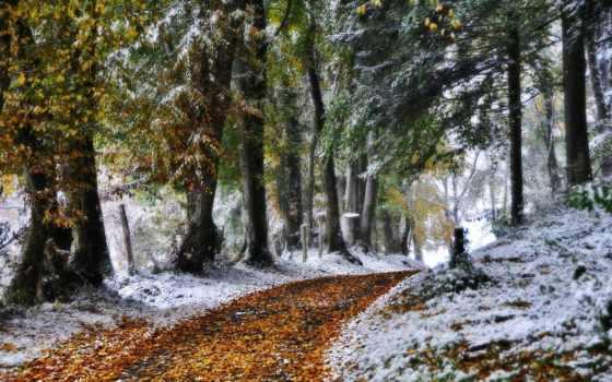 снег, лес, осень
