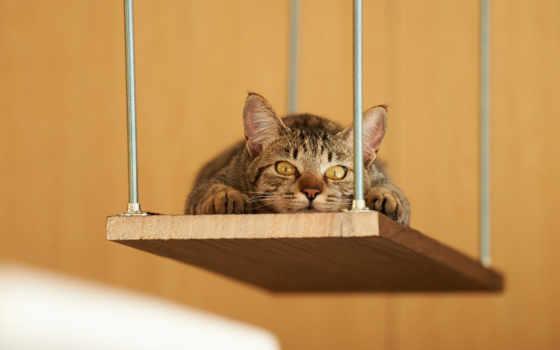кошаки, нь, котэ, кот, лежа, positive, мотиваторы, еще, кошки, страница, отдых,