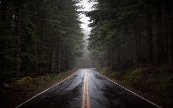 лес, дорога Фон № 22443 разрешение 1920x1280