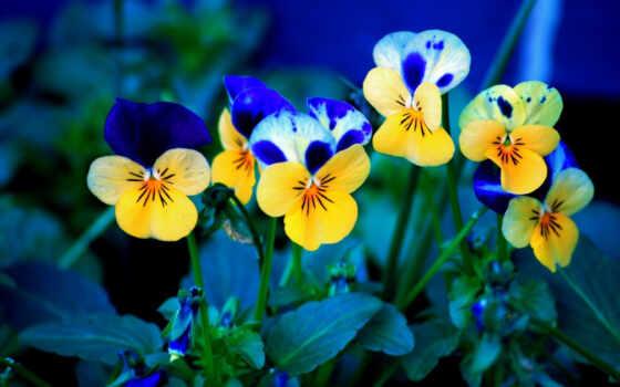цветы, красивые Фон № 50041 разрешение 1920x1200