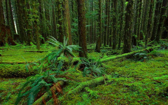 лес, папоротник, фон