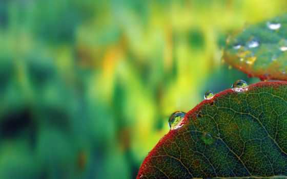 картинка, листья, капли, заставка,