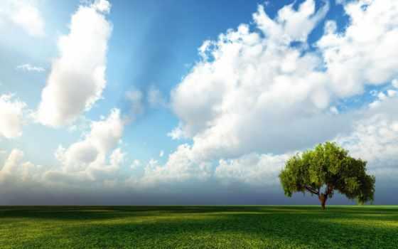 oblaka, природа, широкоформатные, поле, небо, дерево, заставка, просмотров, войны, горизонте,