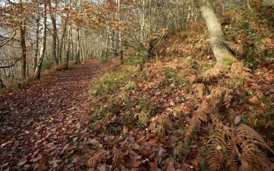 папоротник, лес, листва