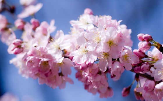 цветение, весны, высокого, весна, разрешения, мар, cvety, свой, цитатник, community, целикомв,