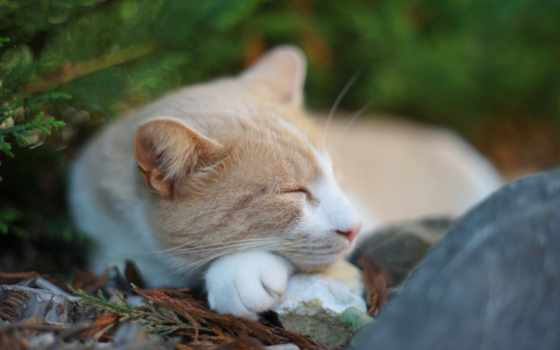 sleeping, abyss, кот, smartphone,