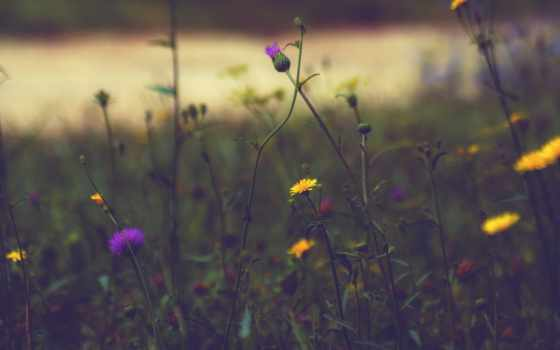 природа, landscape, free, water, desktop, high, clouds,