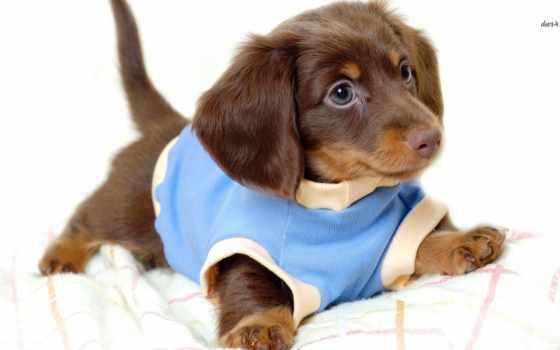 живые, щенки, установить, щенок, собаки, android, pretty, small, apk, долгое, рабочему,