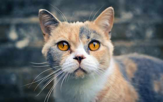 кошками, кот, белая, котята, photos, mobilnogo, телефона, планшета, племя, котенок, ноутбука,