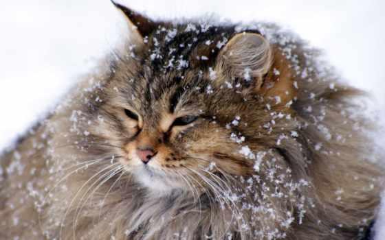 снежинки, великан
