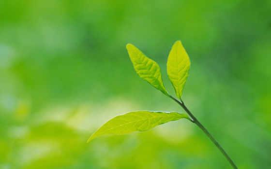 green, leaves Фон № 24041 разрешение 1680x1050