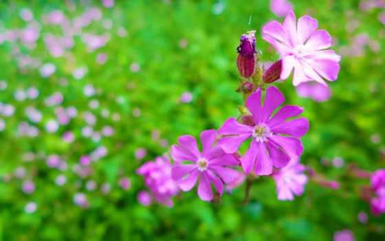 garden, desktop, фон