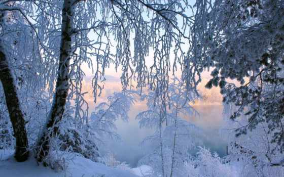 иней, деревья, снег