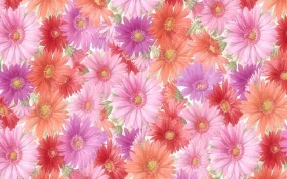 flowers, цветы, desktop Фон № 56547 разрешение 1920x1200