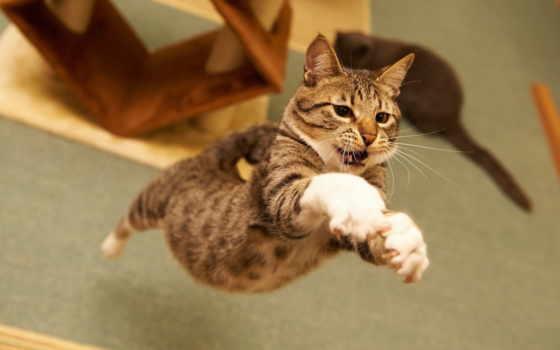 jumping, кот, cats,