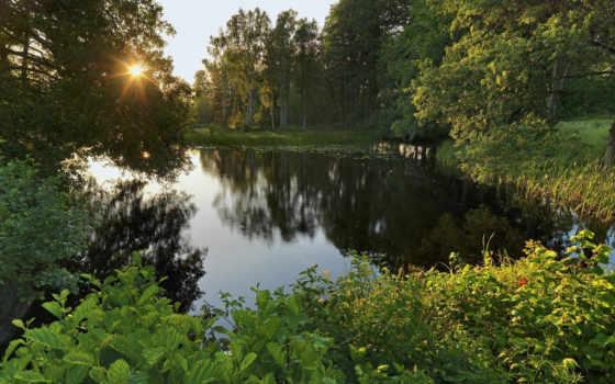 sweden, деревья, лес