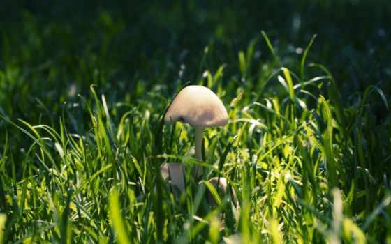 трава, mushroom, you