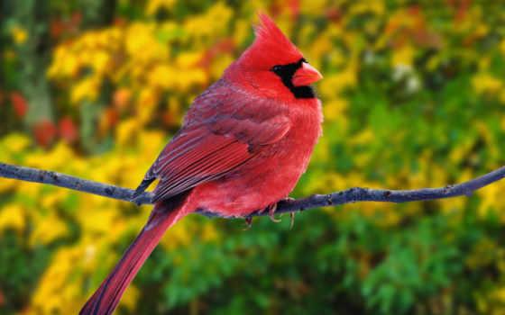 birds, angry, птицы