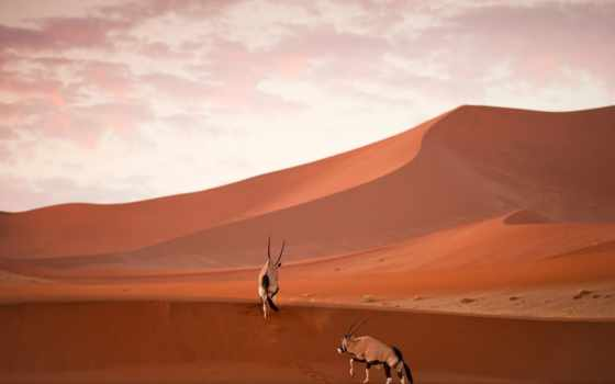 namib, naukluft, national, geographic, nacional, parque, namibia,