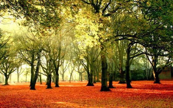 pemandangan, gambar, hutan, yang, indah, menakjubkan, edwards, koleksi, corinne, природа, foto,