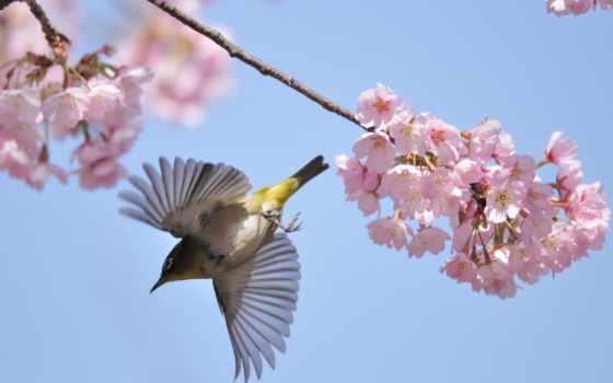 весенние, trees, мар, radionetplus, весна, www, цвету, красивые, cherry, ветки,