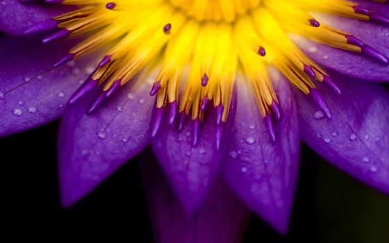 природа, cvety, макро, красивые, главная,