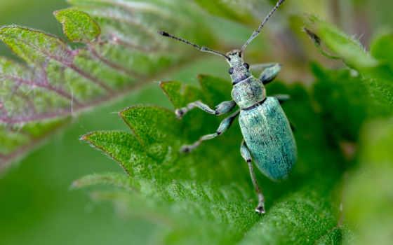 макро, жук, насекомые, качественные, зелёный, насекомое, главная, azul, категории, размытие,