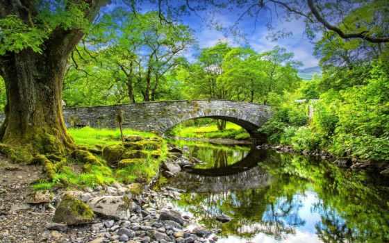 природа, деревья, мост