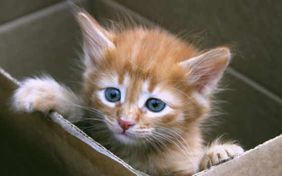 котенок, месяца, котята, милый, месяц, недели, котенка, котят, top,