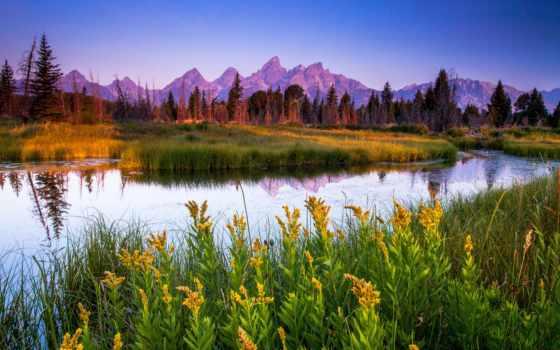 река, цветы, природа