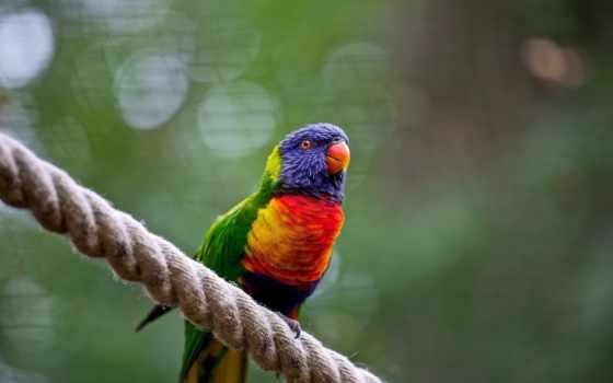 попугай, телефон, картинку, mobile, бесплатную, картинка, birds,