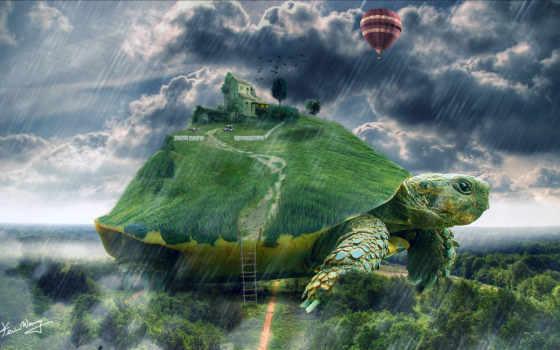house, черепаха, art