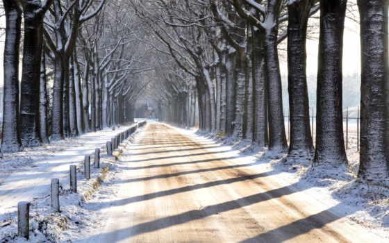 zima, tapety, дрога, pulpit, szpaler, drzew, дорога, winter, природа,