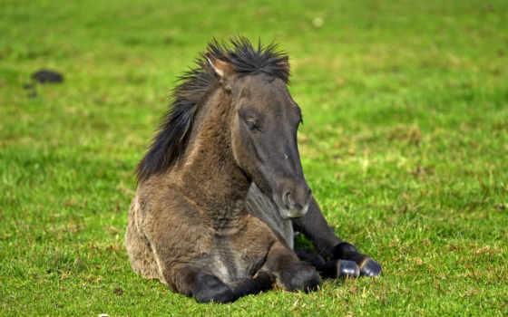 zhivotnye, лошади, tapety, лошадь, трава, run, znajdziesz, konie, discover,