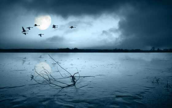 грусть, луна, настроения, птицы, branch, широкоформатные, без,