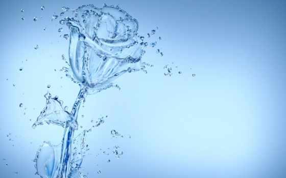 water, роза, blue, drops, art, капли, free,