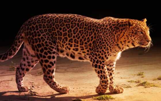 леопард, jaguar, хороший, narrow, дождь, animal, lion, тигр, left, кот