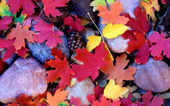 осенние листья Фон № 27625 разрешение 2560x1600