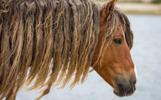 морда, лошадь, profile Фон № 54982 разрешение 1920x1200